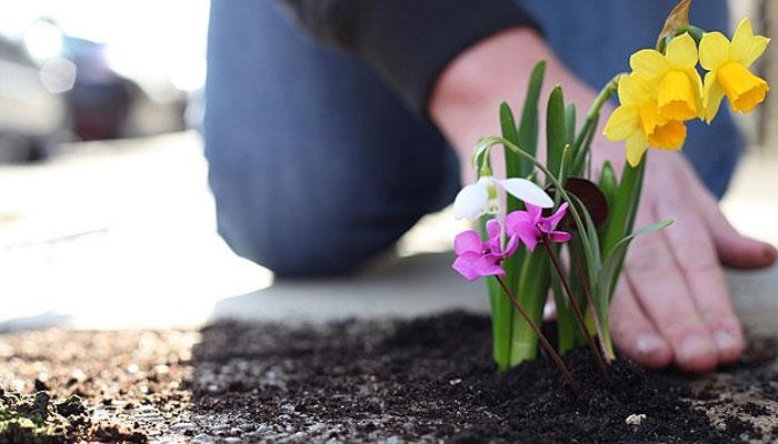 Какие цветы сажать на могилу и когда лучше весной или осенью 69