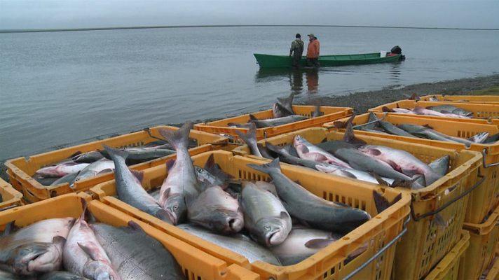 работа на рыболовном судне в краснодарском крае